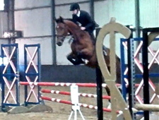 Showjumper Eventer For Sale