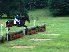 Eventers horse - 5 yrs 1 mth 16.1 hh Bay - Somerset