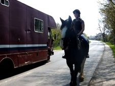 Hunters horse - 5 yrs 16.2 hh Dark Brown - West Sussex