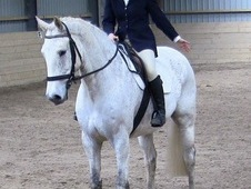 Dressage Prospect - very trainable with correct big moving paces