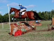 Eventers horse - 16 yrs 15.3 hh Bay - Derbyshire