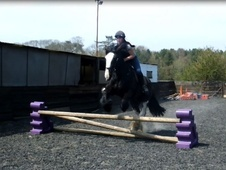 All Rounder horse - 5 yrs 16.2 hh Dark Brown - West Sussex