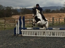 15 hh confidence giving SAFE coloured mare