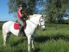 Stunning steady safe sane and sensible pleasure/ hack/ hunt horse