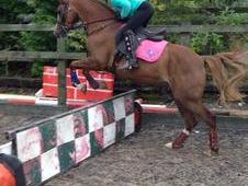 13hh Sec B mare - talented jumping/pc pony