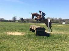 beautiful trakehner mare. super alrounder. potential eventer, BSJ...