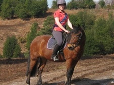 All Rounder horse - 16 yrs 14.2 hh Bay - Hampshire