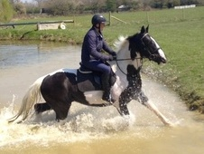 All Rounder horse - 5 yrs 16.1 hh Coloured - Kent