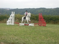 All Rounder horse - 8 yrs 8 mths 12.0 hh Grey - Staffordshire