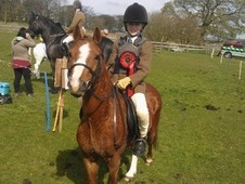 Lead Rein & First Ridden horse - 5 yrs 1 mth 11.0 hh Chestnut - L...