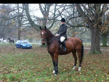 18hh Hunter For Sale