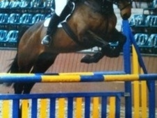 All Rounder horse - 11 yrs 16.2 hh Bay - Fife