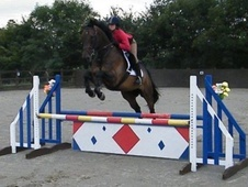 All Rounder horse - 9 yrs 16.3 hh Dark Bay - Surrey