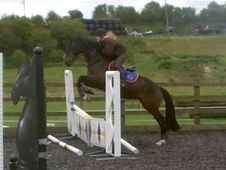 Potential young sports horses horse - 4 yrs 3 mths 15.2 hh Dark B...
