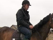 All Rounder horse - 7 yrs 1 mth 16.2 hh Dark Bay - Essex