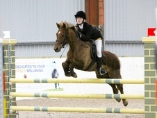All Rounder horse - 8 yrs 13.2 hh Chestnut - Orkney