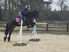 All Rounder horse - 7 yrs 1 mth 13.2 hh Dark Bay - Kent