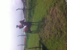 Pony Club Ponies horse - 5 yrs 3 mths 14.1 hh Chestnut - West Yor...