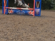 Bargain Price For An Amazing Pony - Sadly Needs To Be Sold Having...