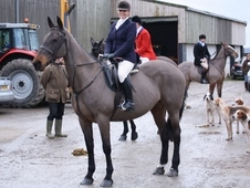 River Registered Irish Sport Horse