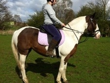 All Rounder horse - 12 yrs 14.1 hh Coloured - West Yorkshire