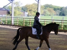 Dressage horse - 11 yrs 2 mths 16.2 hh Bay - Cheshire