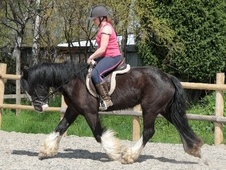 All Rounder horse - 6 yrs 1 mth 15.1 hh Black - Avon