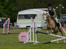 Stunning 13. 2hh competition pony