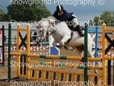 All Rounder horse - 14 yrs 14.0 hh Fleabitten Grey - Avon