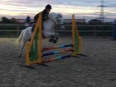 13. 2hh super fun pony