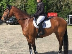 Serious 9yr old young rider/junior horse prospect