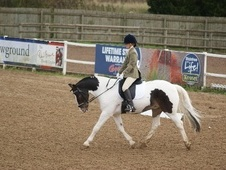 All Rounder horse - 13 yrs 14.2 hh Skewbald - Herefordshire