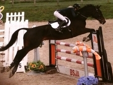All rounded/ Showjumper