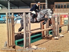 All Rounder horse - 6 yrs 14.0 hh Iron Grey - Surrey