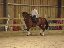 16hh Id X Tb Mare - Jump / X-country / Dressage