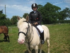 All Rounder horse - 10 yrs 1 mth 13.2 hh Cremello - Leicestershire