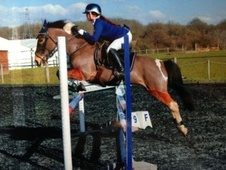 All Rounder horse - 12 yrs 13.3 hh Skewbald - Surrey