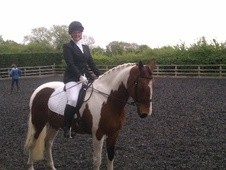 All Rounder horse - 8 yrs 5 mths 15.3 hh Tobiano - West Midlands