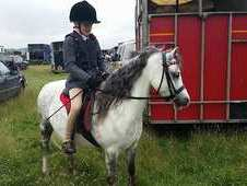 Mother's Dream First Pony! Prettiest Safest Sweetest