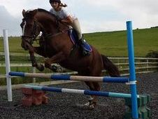 7 Year Old Pretty 16. 1 Hh Ish Mare