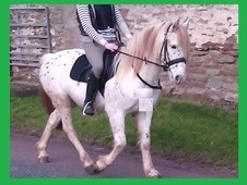 RIDER WANTED 13. 1hh pony for loan