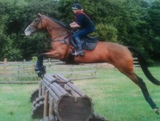 Lovely sweet Broodmare / Light Hack For sale.