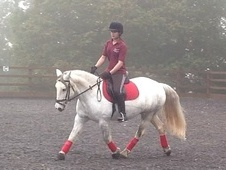 All Rounder horse - 11 yrs 1 mth 14.1 hh Grey - Essex