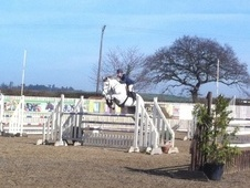Potential young sports horses horse - 30 yrs 16.2 hh Grey - North...