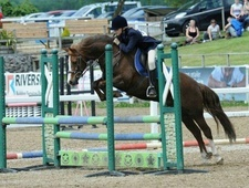 All Rounder horse - 12 yrs 13.2 hh Liver Chestnut - Gwent