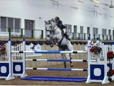Show Jumpers horse - 30 yrs 15.2 hh Grey - North Humberside