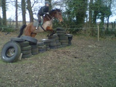 All Rounder horse - 8 yrs 15.2 hh Bay - North Humberside