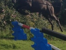 Potential young sports horses horse - 2 yrs 6 mths 15.3 hh Black ...