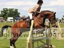 Lovely 15. 2 Gelding For Sale.