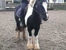 Danny 14. 1h Super Pony £1650
